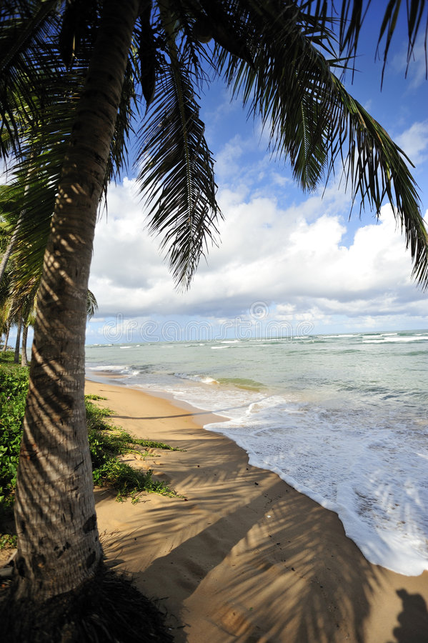 Download Paradise Beach stock image. Image of climate, summer, heat - 5247539