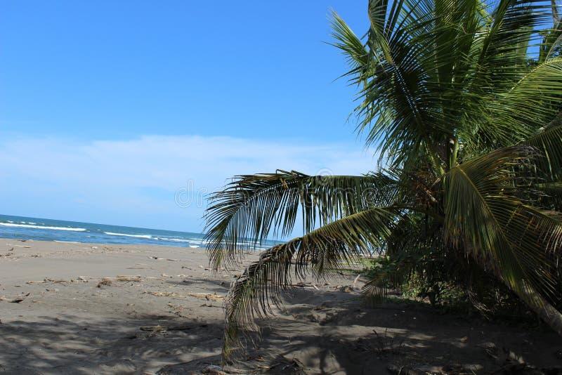Beach royalty free stock image