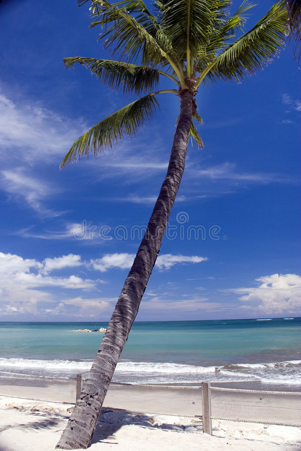 Download Paradise beach palm stock image. Image of trunk, paradise - 5211005