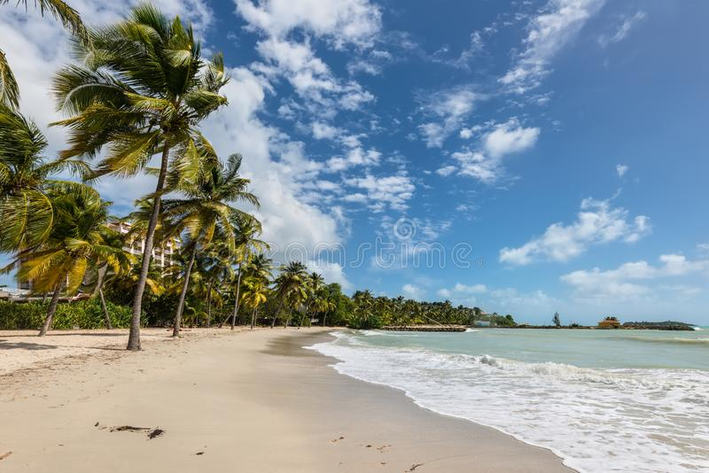 Paradise beach and palm tree - the Gosier in Guadeloupe, Caribbean. Le Gosier, Guadeloupe - December 20, 2016: Paradise beach and palm trees near Le Gosier in stock image