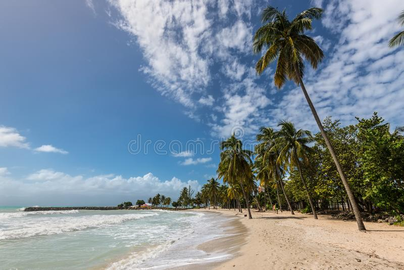 Paradise beach and palm tree, Guadeloupe island, Caribbean. Le Gosier, Guadeloupe - December 20, 2016: Paradise beach and palm trees near Le Gosier in Guadeloupe royalty free stock photo