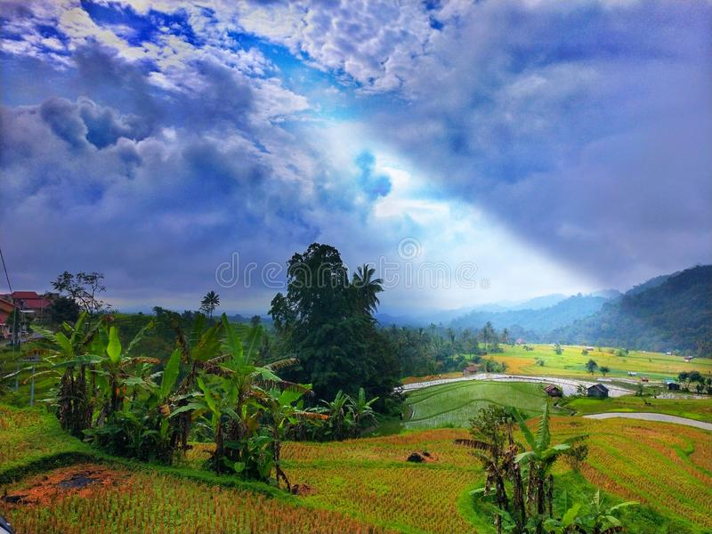 Paradise de paysage tropical de paddy de gisement de riz de secteur photo libre de droits