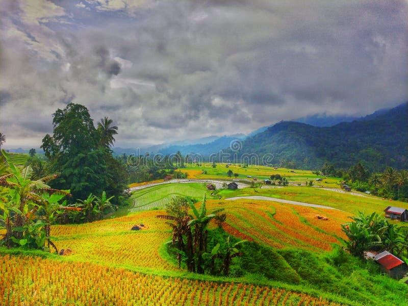 Paradise de paysage tropical de paddy de gisement de riz de secteur image libre de droits