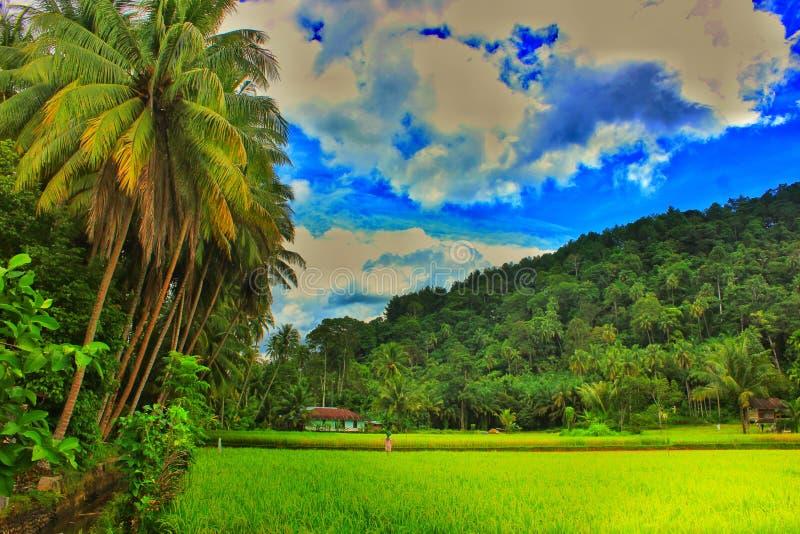 Paradise de paysage tropical de paddy de gisement de riz de secteur images stock