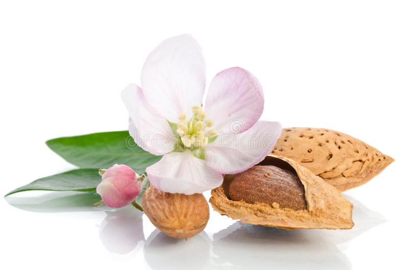 Paradise flower with almond nuts. On white background stock photo