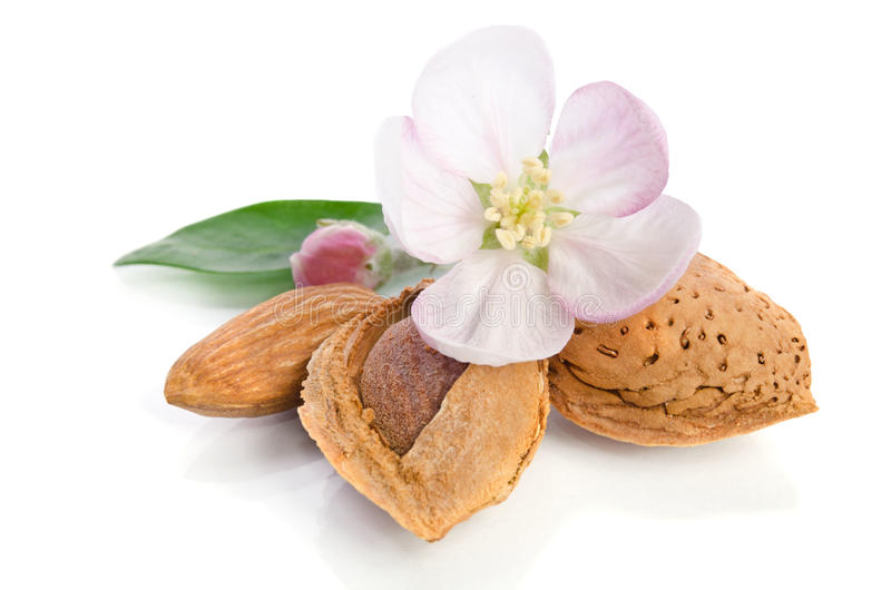 Paradise flower with almond nuts. On white background royalty free stock photography
