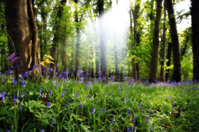 Download Paradise found 4 stock photo. Image of grass, forrest - 2849596