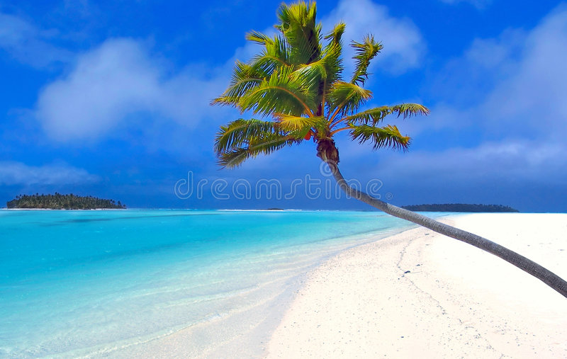 Paradise Palm II stock photography