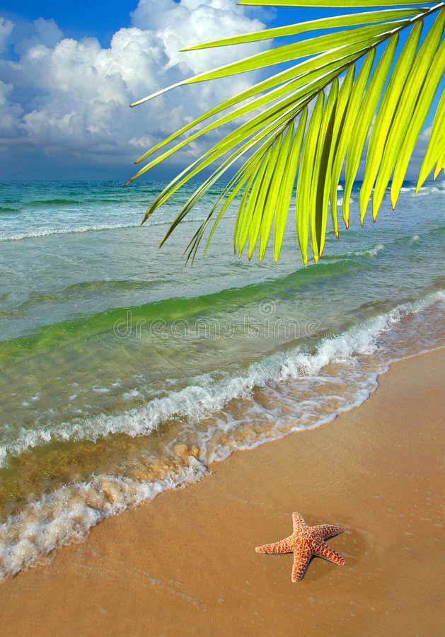 Paradise With Palm Tree. And Starfish on the shore of beautiful beach with colorful and clean waters