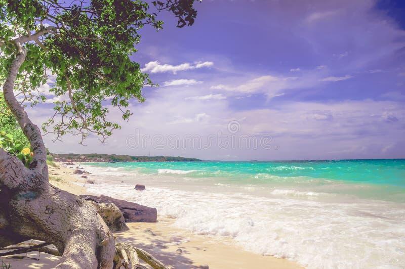 Paradise Playa Blanca beach of Baru island by Cartagena in Colombia. Paradise Playa Blanca beach of Baru bin Colombia royalty free stock photography