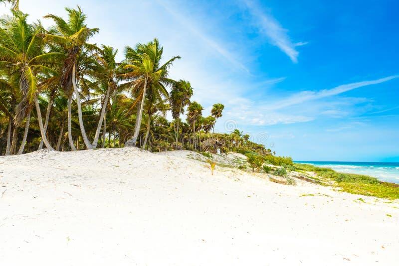Paradise strand med härliga palmträd - karibiskt hav i Mexiko, Tulum royaltyfri bild