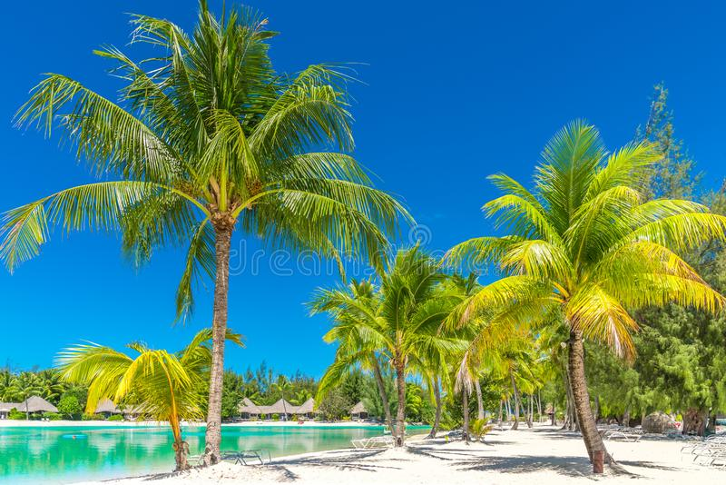 Paradise. Tropical resort wtih palm trees and turquoise water in summer royalty free stock photos