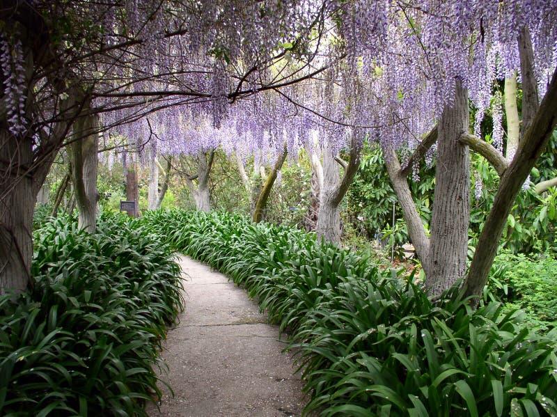 Download Paradise walkway stock photo. Image of japanese, hanging - 1411842