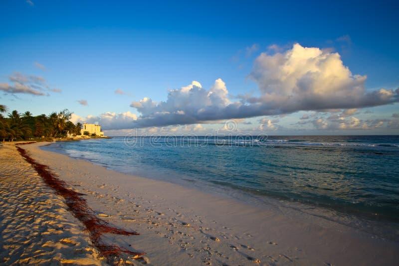 Download Paradisiac White Sand Beach Stock Image - Image: 14098017