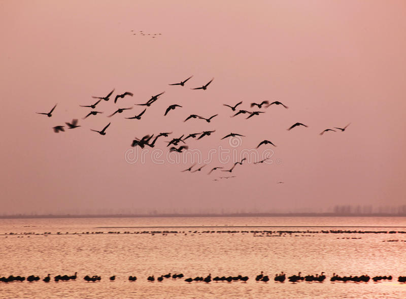 Paradiso degli uccelli immagini stock libere da diritti