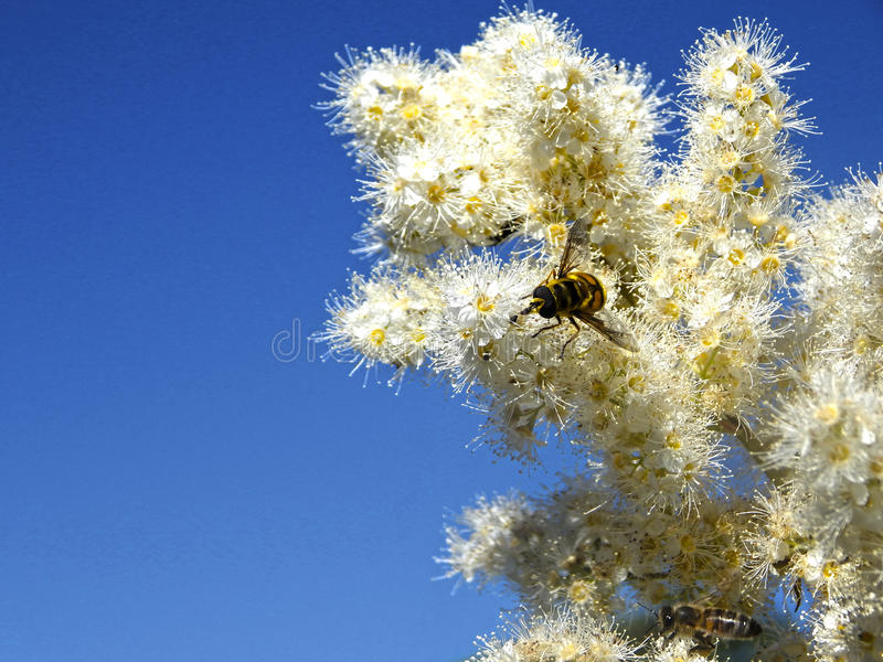 Paradiso dell'ape fotografie stock
