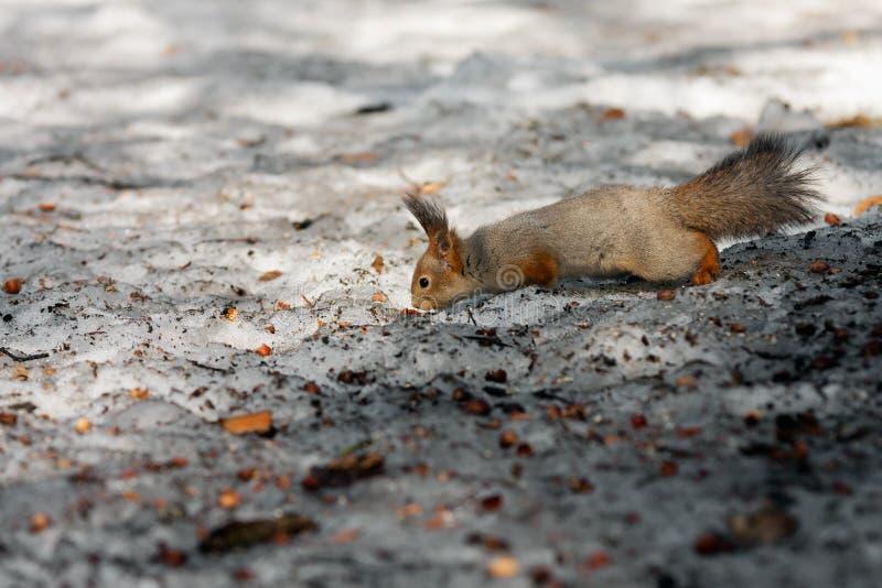 Paradiso dello scoiattolo fotografie stock libere da diritti