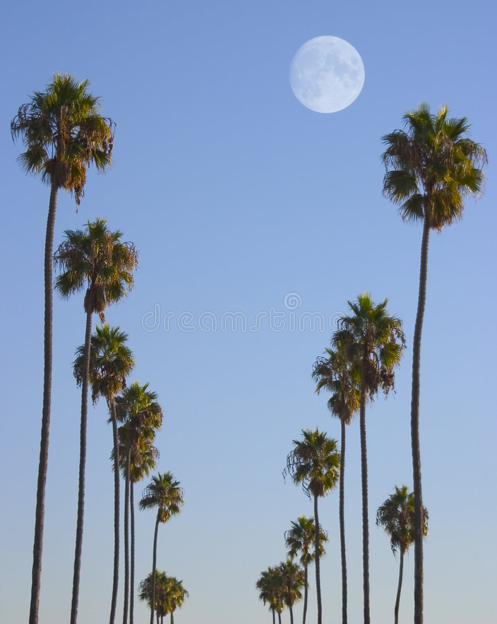 Paradiso di Hollywood fotografie stock