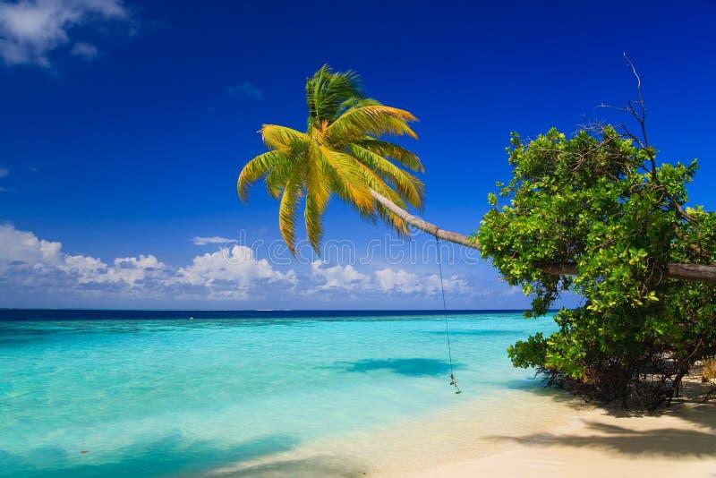 Paradiso tropicale ai Maldives fotografie stock