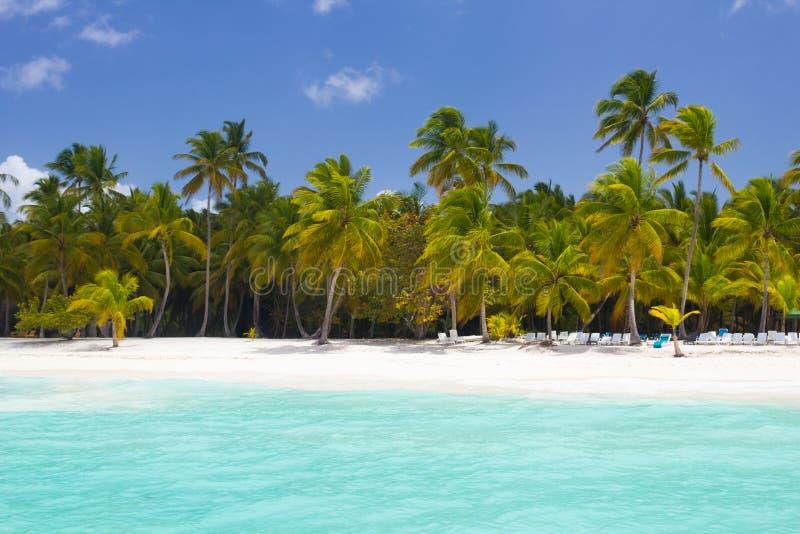 Paradiso tropicale con le palme fotografia stock