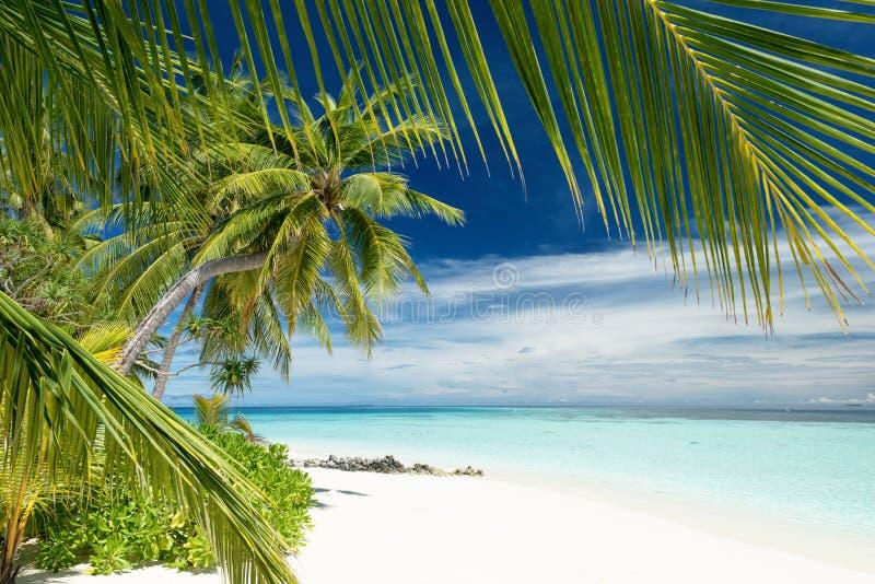 Paradiso tropicale spiaggia fotografia stock libera da diritti