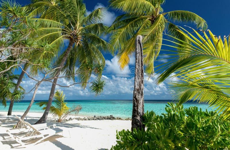 Paradiso tropicale spiaggia fotografie stock