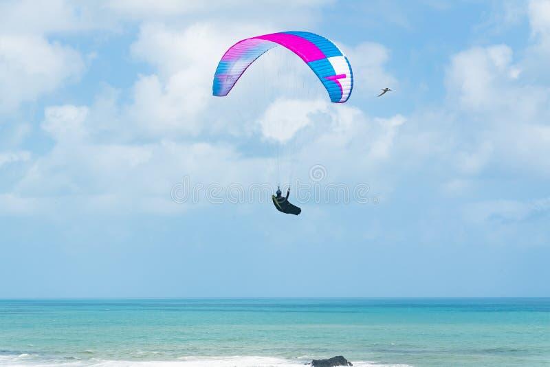 paragliding Vuelo sobre el océano Playa de Muriwai, Nueva Zelanda fotografía de archivo libre de regalías