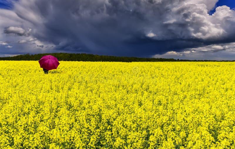 Paraguas solo entre campo con la rabina floreciente fotos de archivo libres de regalías