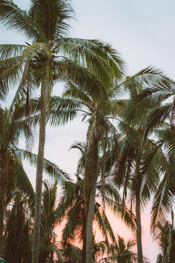 Paraiso стоковое изображение rf