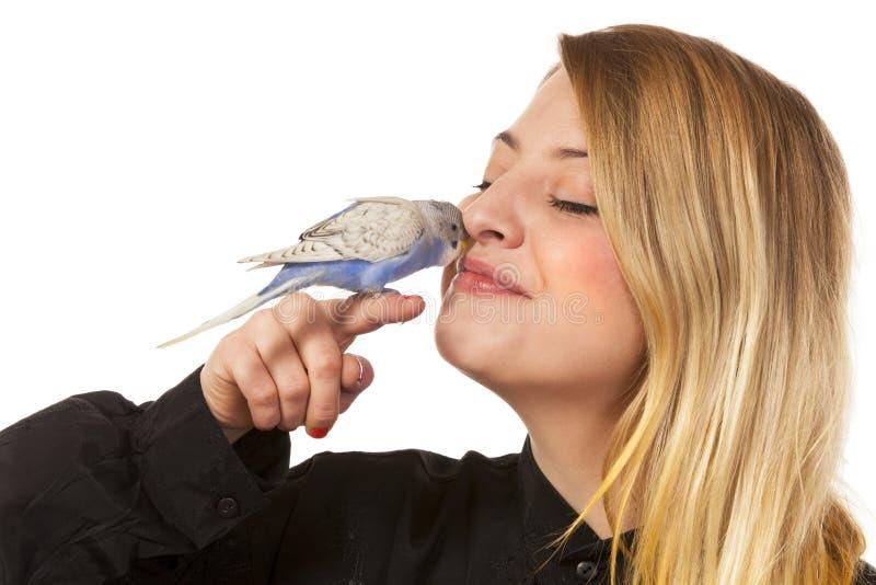 Parakeet amichevole immagini stock