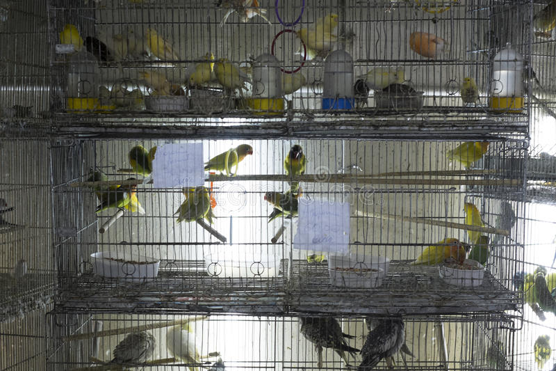 Parakiter i till salu burar royaltyfria foton