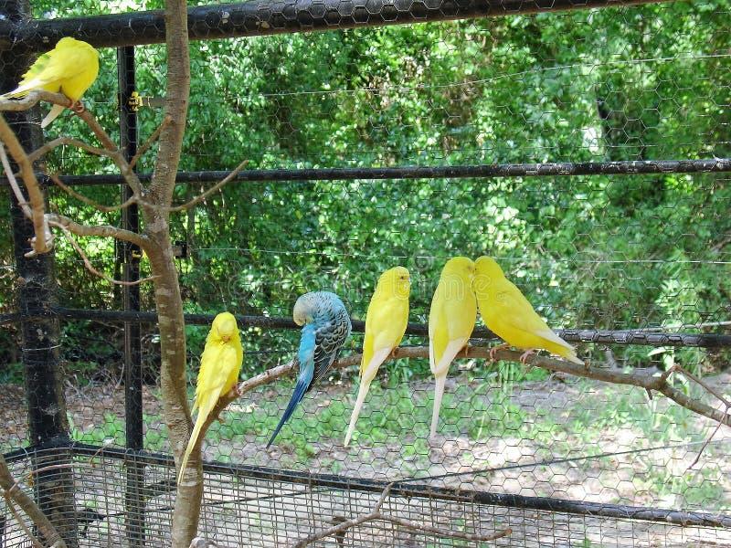Parakiter på zoo arkivbilder