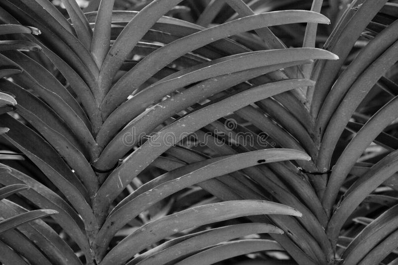 Parallel Leaves stock photos