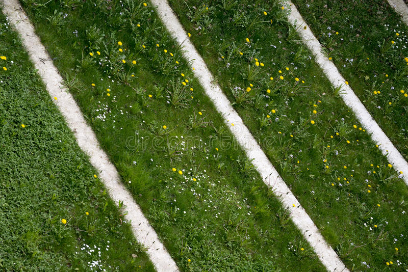 Parallel lines. Weeds and flowers overgrowing parallel white lines stock images