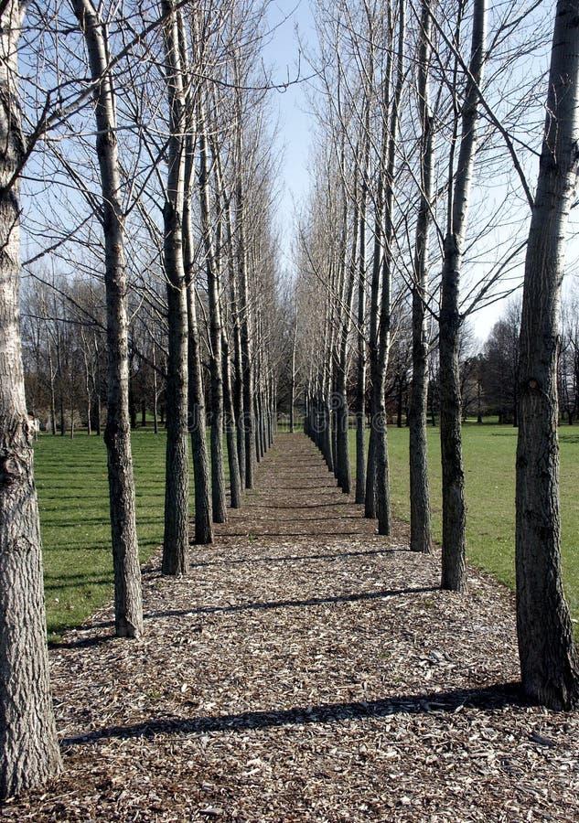 Download Parallella trees fotografering för bildbyråer. Bild av sikt - 227795