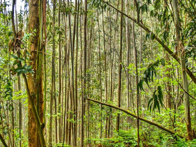 parallella trees grensle spain royaltyfri foto