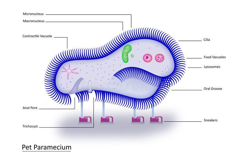 parameciumhusdjur royaltyfri illustrationer