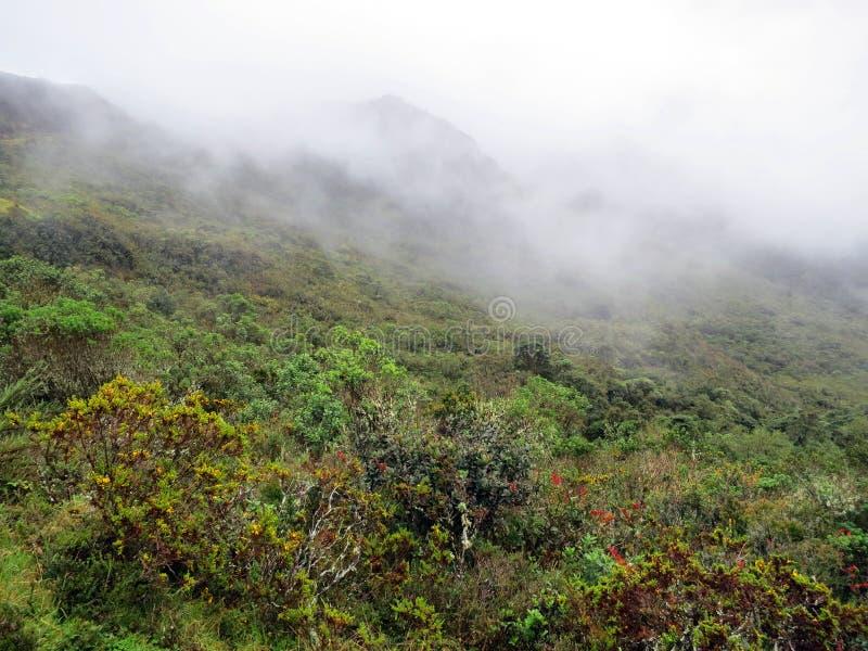 Paramo Chingaza naturlig nationalpark, Colombia royaltyfri foto