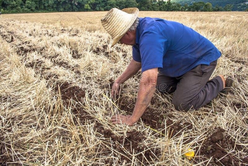 Farmer checks planting in field stock image