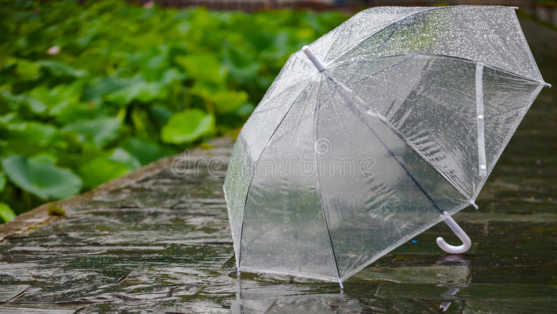 paraplu stock foto's
