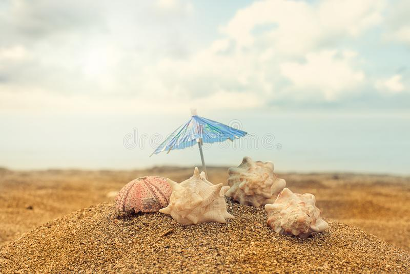 Paraplu, overzeese shell en zeeëgelshell in het zand stock afbeeldingen