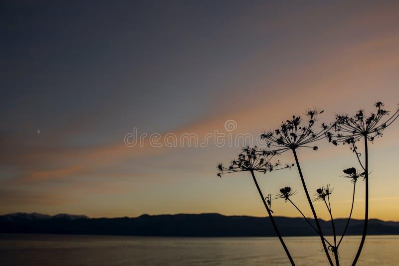 Paraplu's van gras tegen de de het zonsonderganghemel, meer en bergen stock foto's