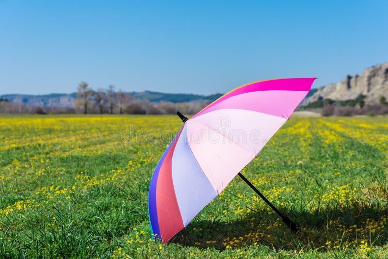 Parapluie coloré placé sur l'herbe dans Sunny Day photo libre de droits