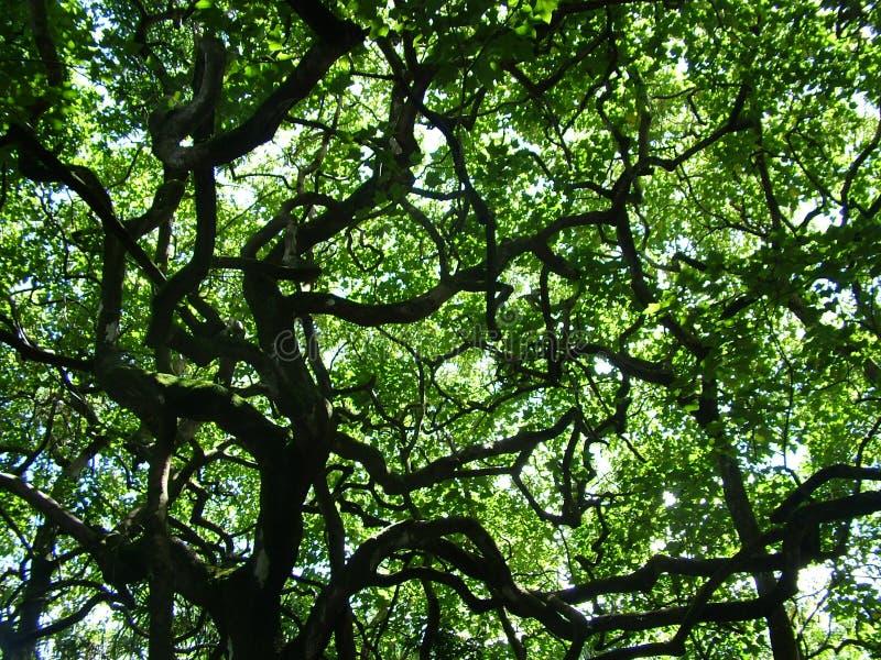 Parapluie de cime d'arbre photographie stock