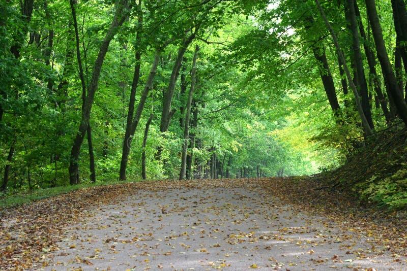 Parapluie tôt d'automne photos libres de droits