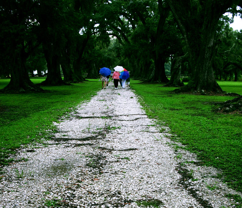 Parapluies sur Shell Path Under Oaks photographie stock