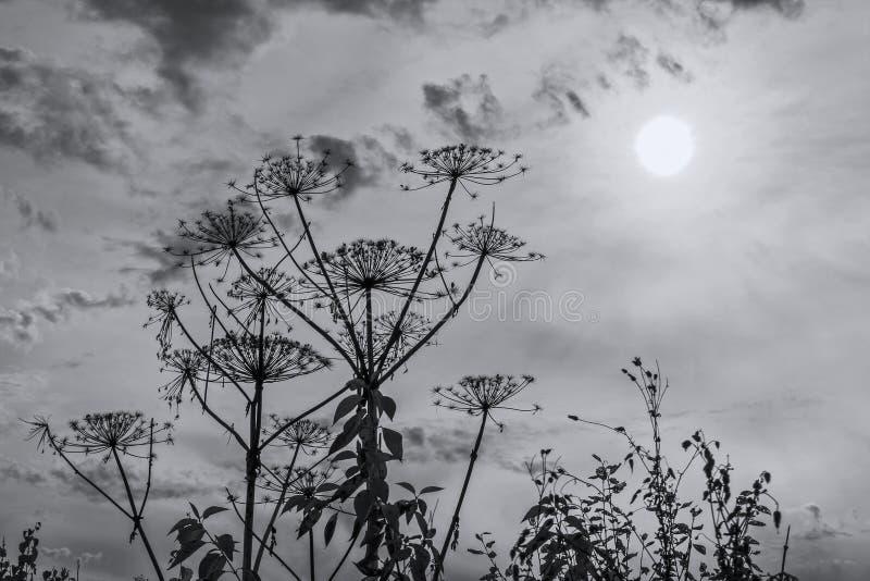 Parapluinstallatie tegen hemel en zon royalty-vrije stock foto