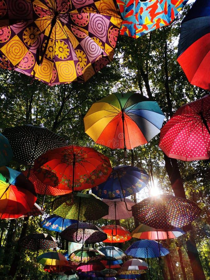 Paraplyer som hänger på träd med solen som skiner till och med dem royaltyfria foton