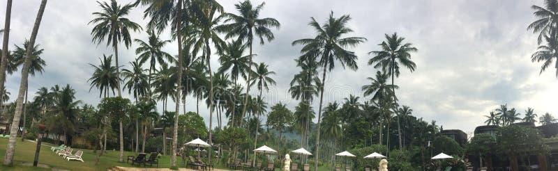 Paraplyet och chaisen är slö på en strand gömma i handflatan under _ royaltyfri bild