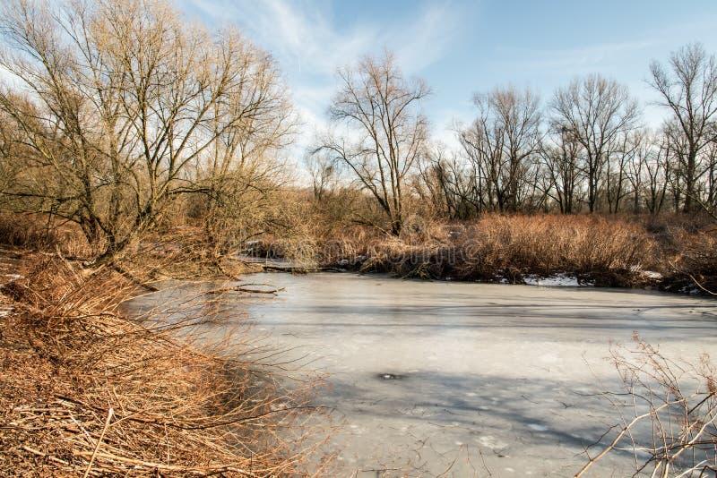 Parapotamon gelé de rivière d'Odra près de ville de Bohumin aux frontières de tchèque-poli photographie stock libre de droits
